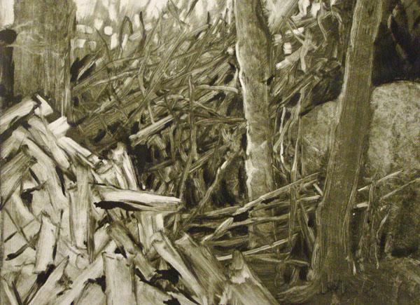 Woodpile, Lubec, 2003