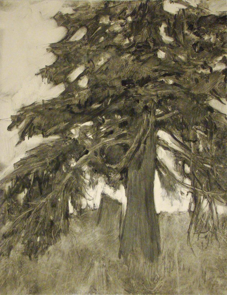 Spruce Tree (2010)